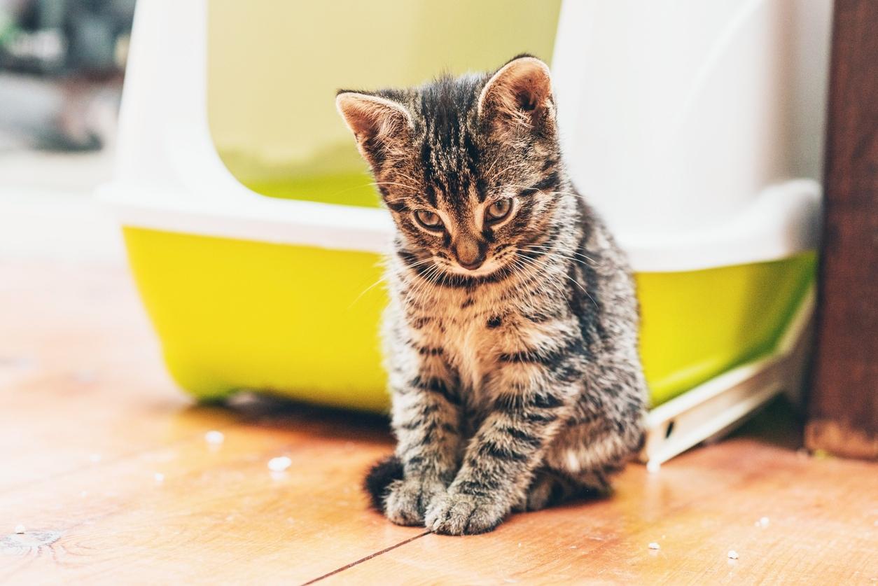 Chat Constipé Que Faire En Cas De Constipation Chez Le Chat