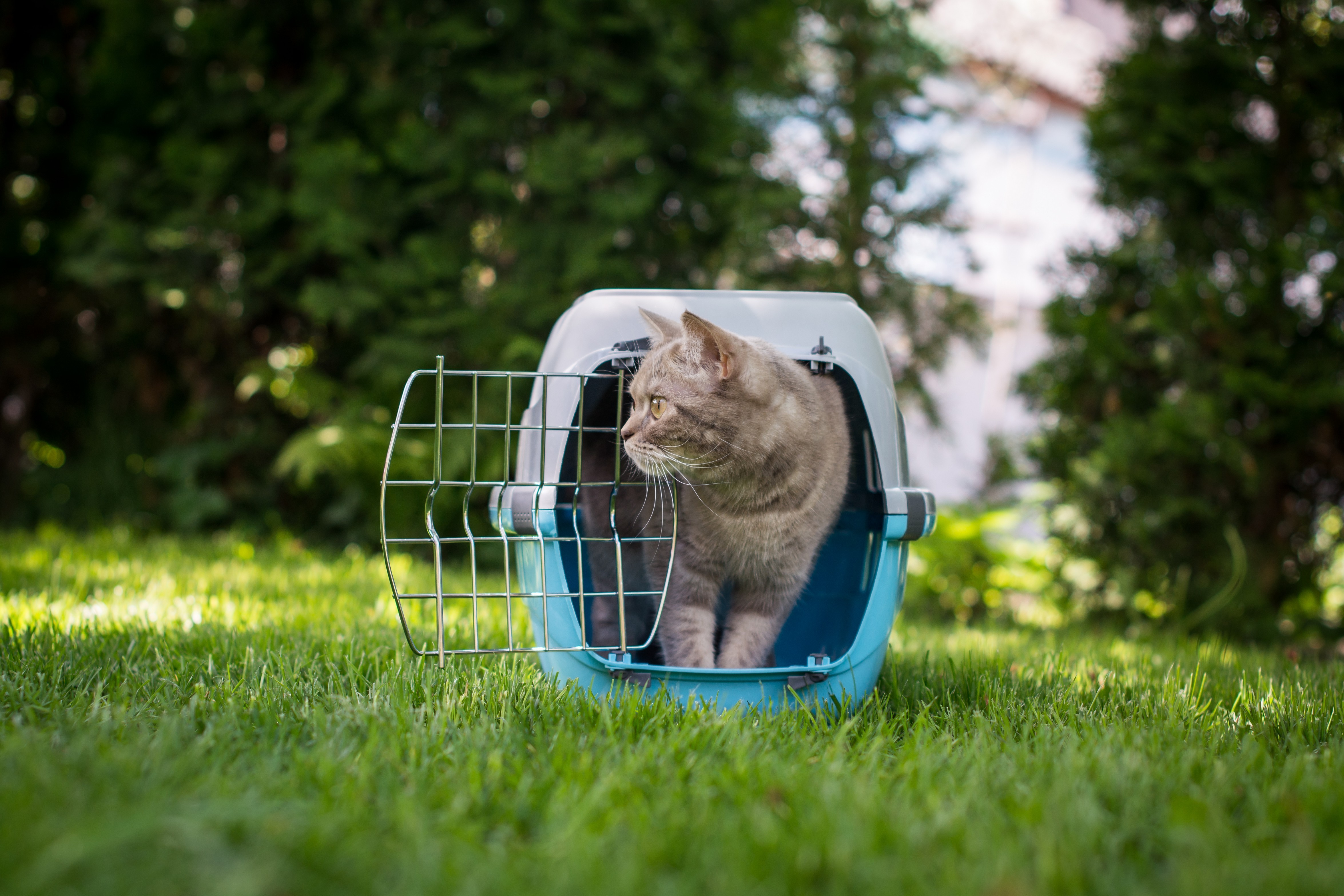 chat cage de transport