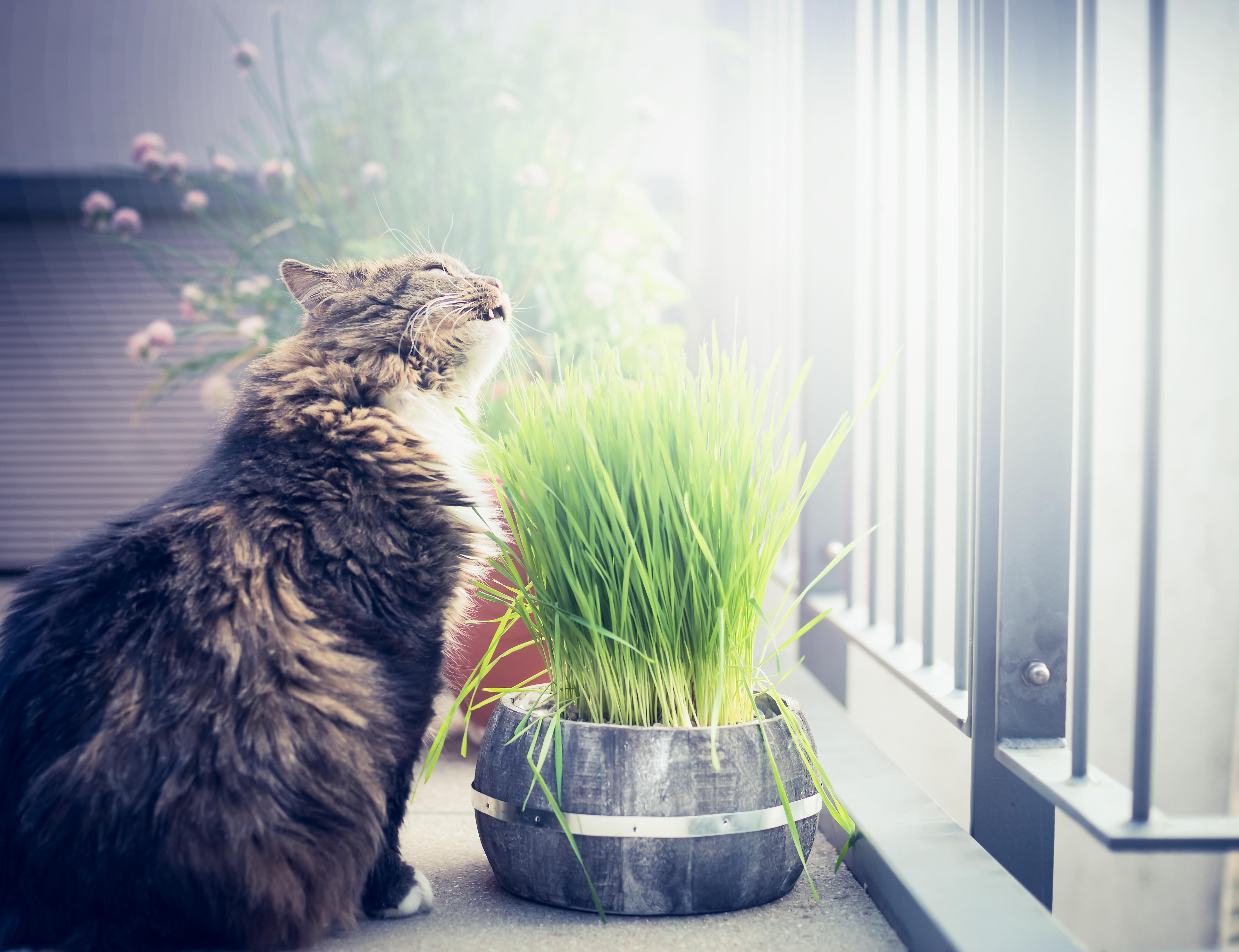 Pourquoi mon chat mange-t-il de l herbe     Bulle Bleue f1ef0b1bb6cf
