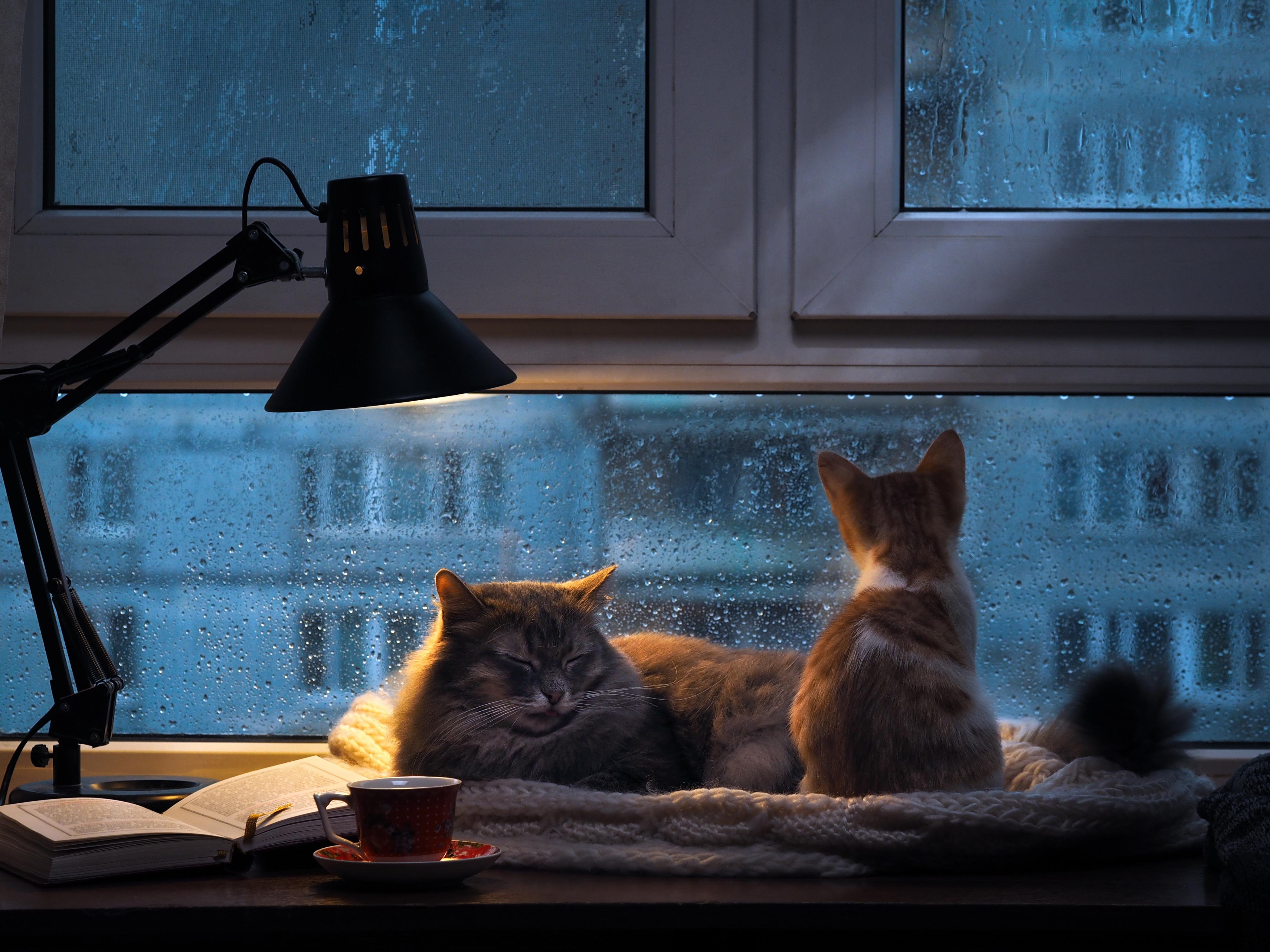 mon chat se r veille la nuit que faire bulle bleue. Black Bedroom Furniture Sets. Home Design Ideas