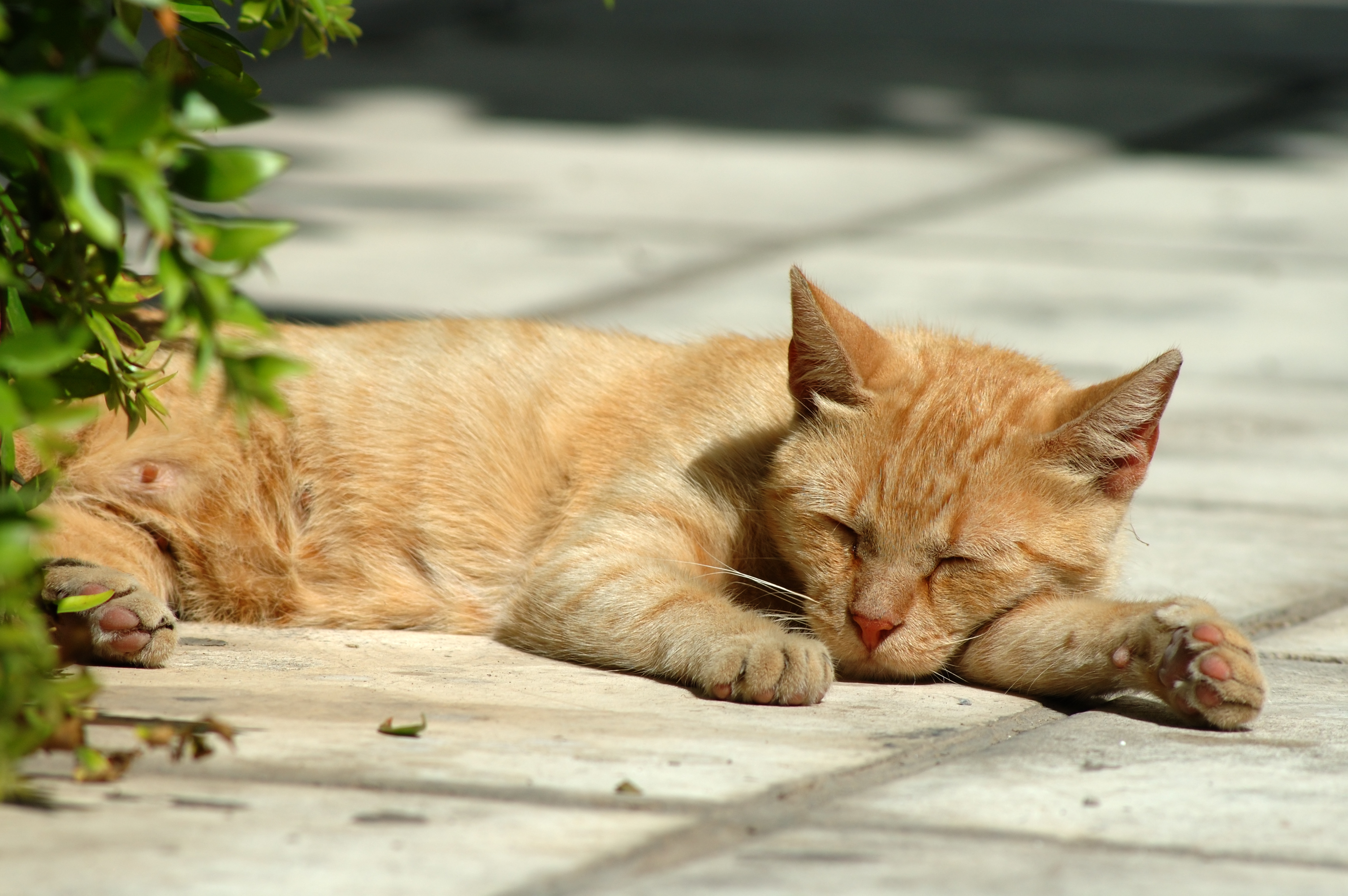 Pr venir le coup de chaleur chez le chat bulle bleue - Coup de chaleur chat symptomes ...