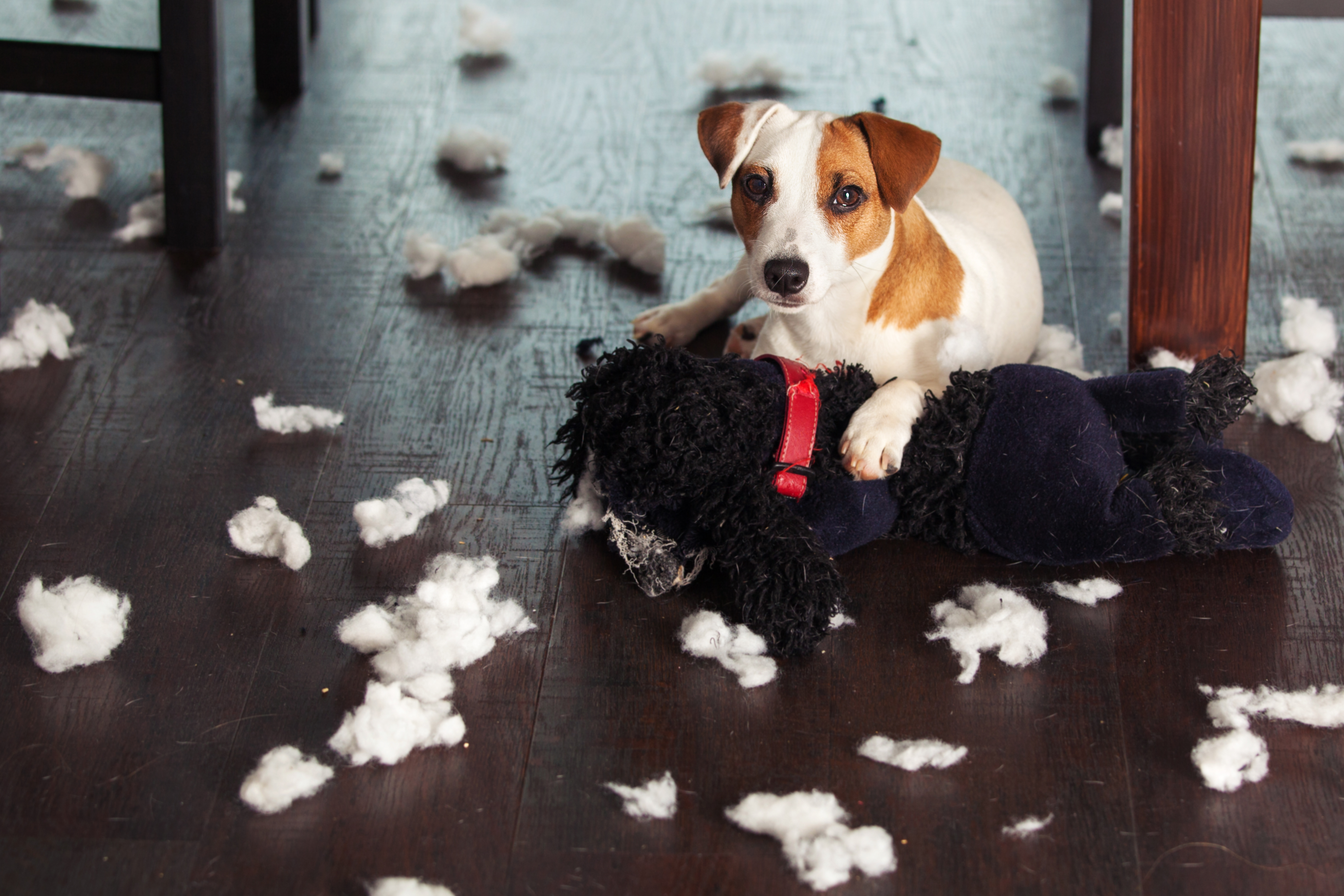 Mon chien souffre-t-il d'un trouble du comportement