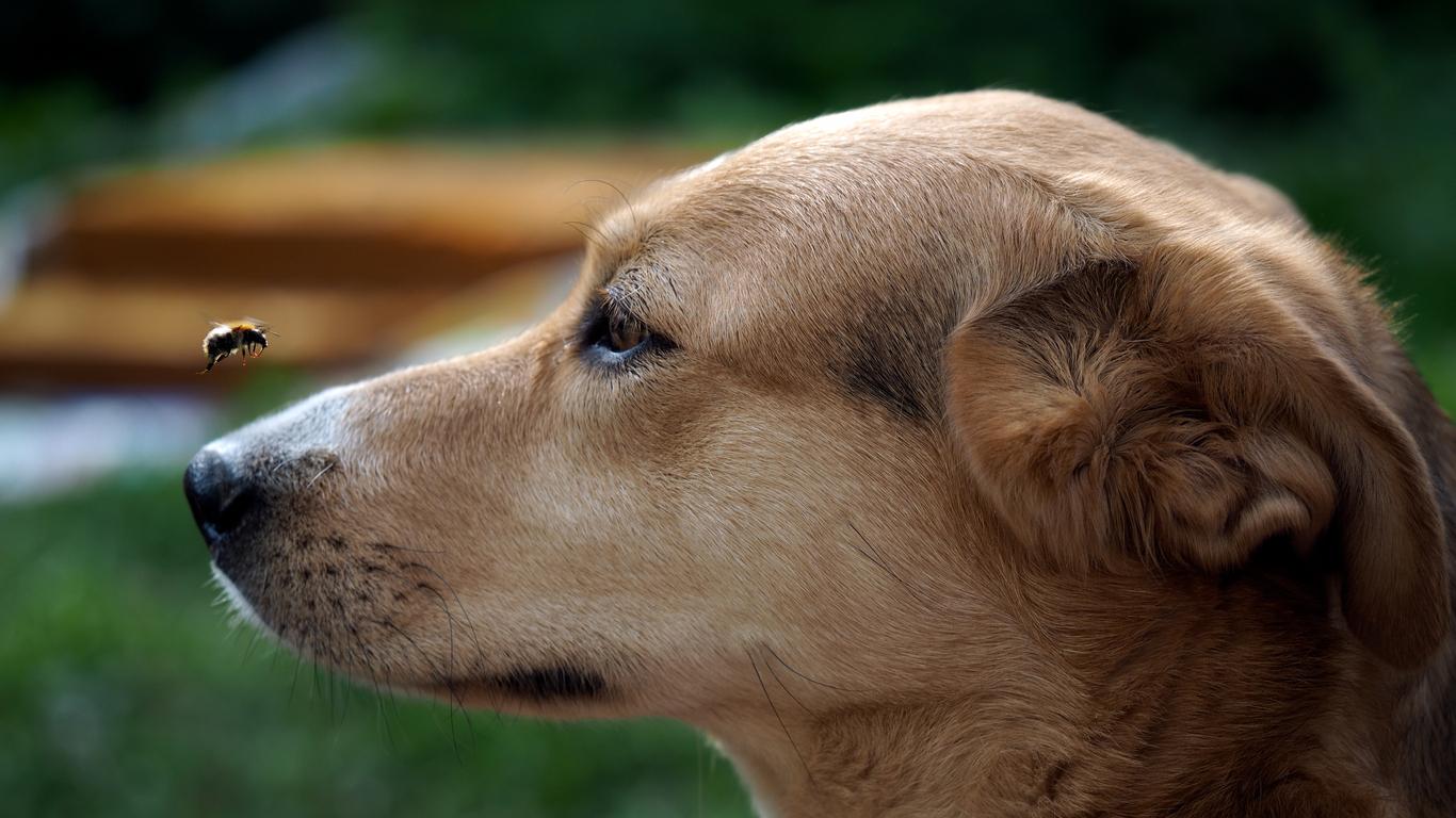 L'éducation du chien par le jeu | Bulle Bleue