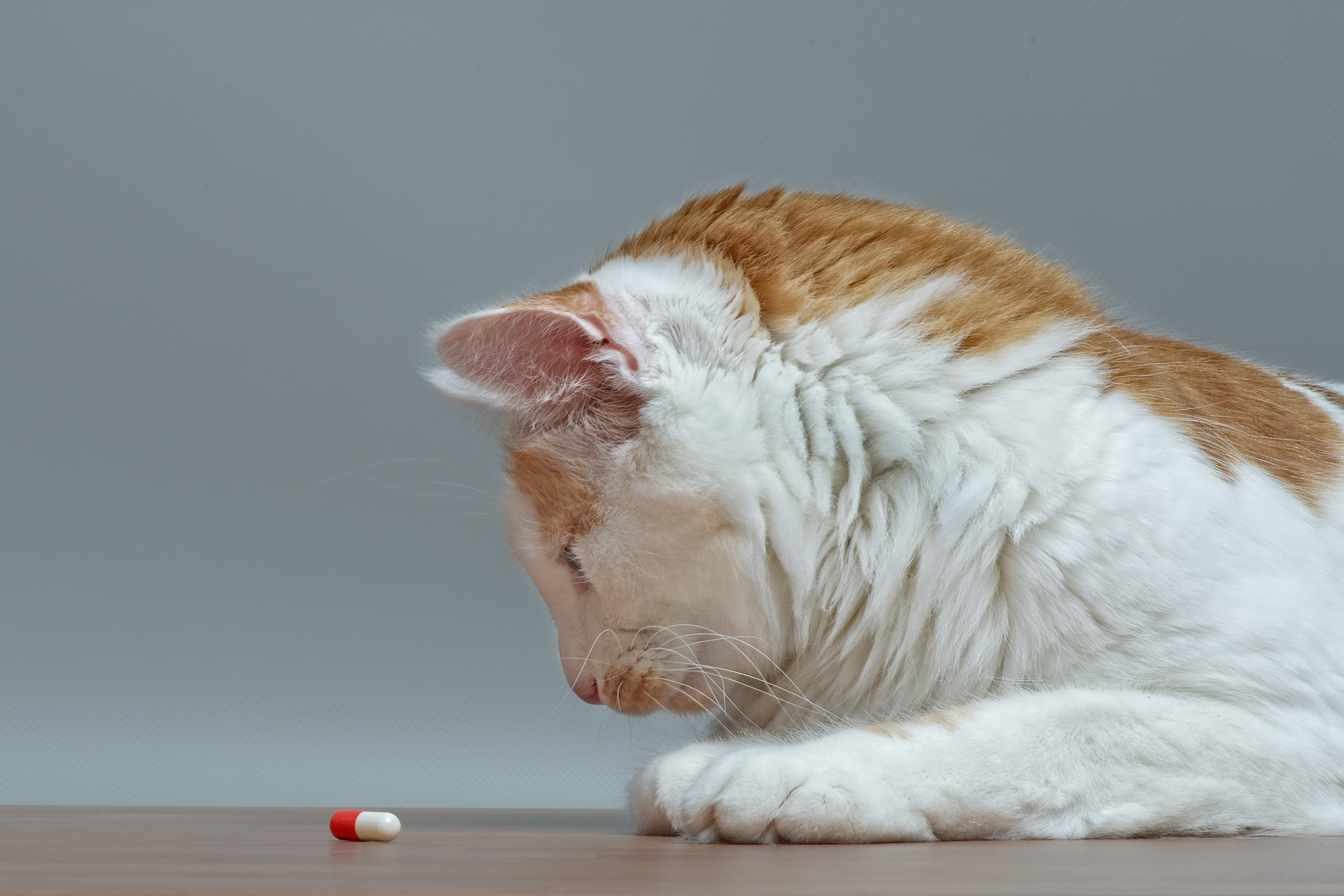 chat benzodiazepines