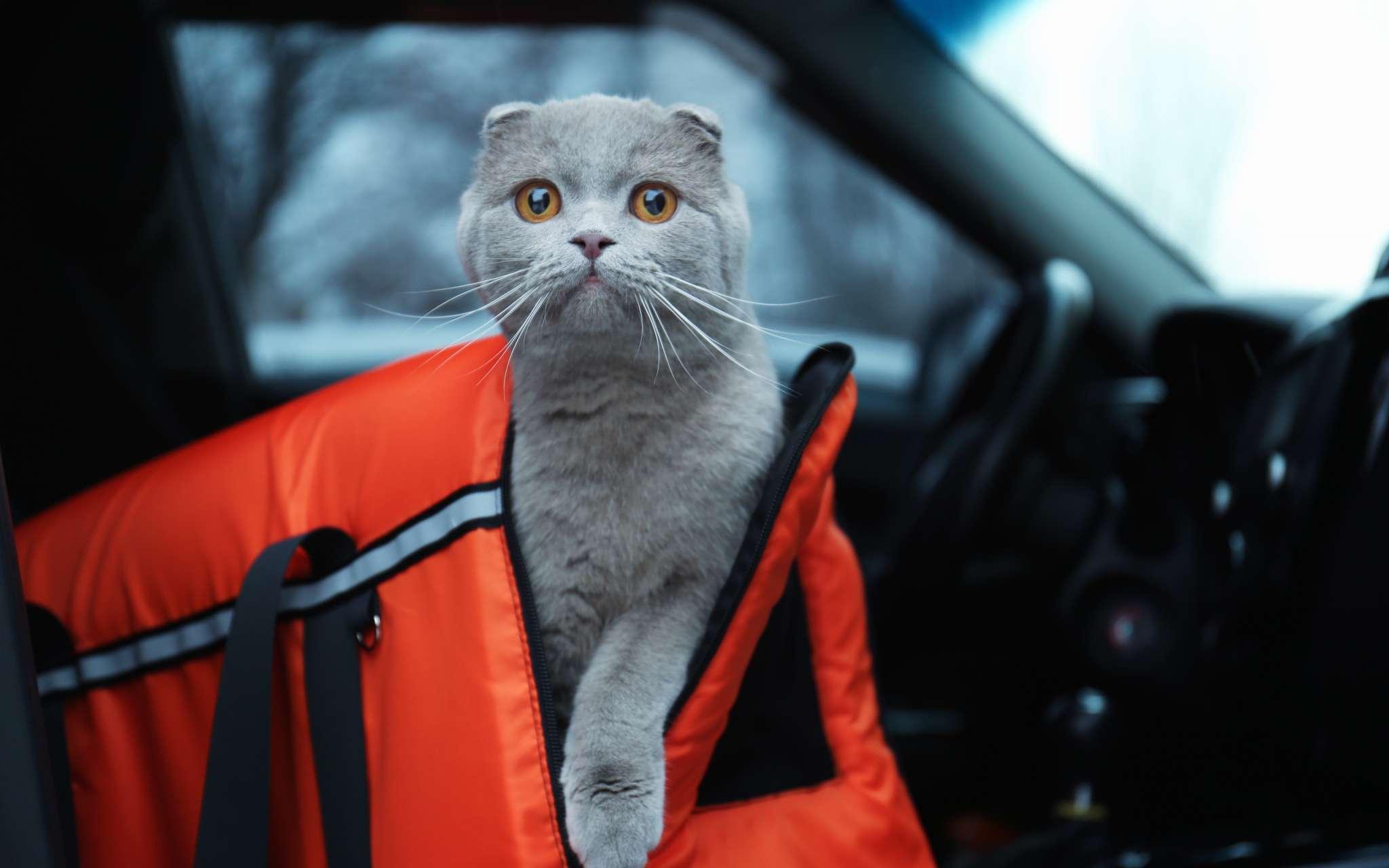 assurer le bien tre de son chat lors d un long trajet en voiture bulle bleue. Black Bedroom Furniture Sets. Home Design Ideas