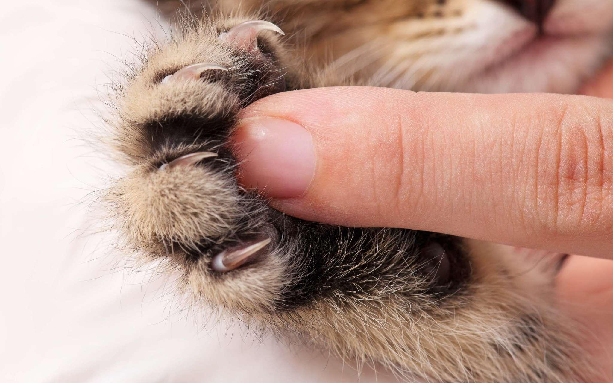 Faut il couper les griffes de son chat bulle bleue - Comment couper les griffes de son chat ...